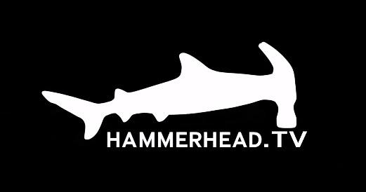 hammerhead logo